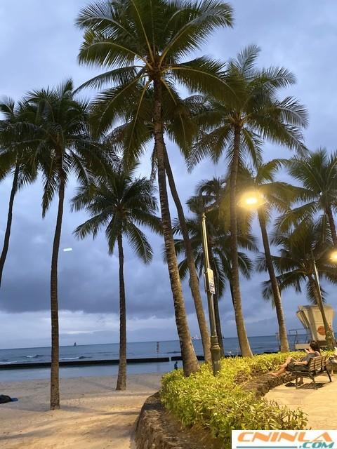 Waikiki_Beach_5_480x640